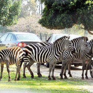 Safari Ramat-Gan